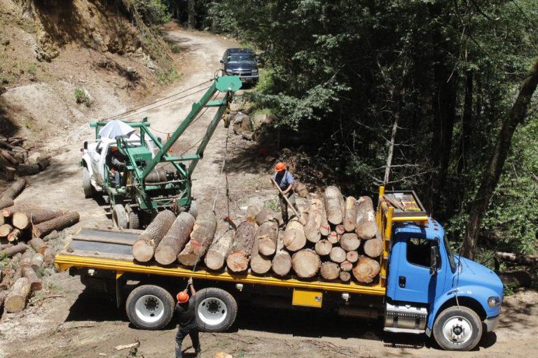 Manejo forestal en Oaxaca