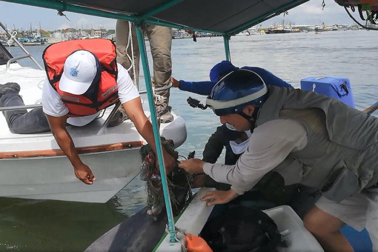 Delfines del Golfo de Guayaquil. La principal amenaza para los delfines en el Golfo de Guayaquil son las artes pesqueras, el tráfico marítimo y el deterioro de la calidad de agua. Fotografía de Fernando Félix.