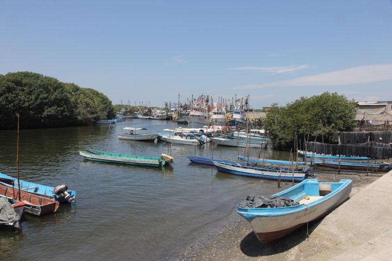 Delfines del Golfo de Guayaquil. El golfo de Guayaquil es la zona más productiva en la costa de Ecuador. Aquí se asienta el 90 % de la industria camaronera y se realiza la mayoría de la pesca industrial costera. Fotografía de Fernando Félix.