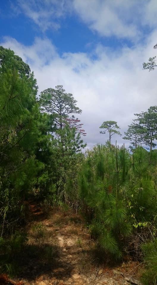 Monte Sinaí-Chiapas-Manejo forestal