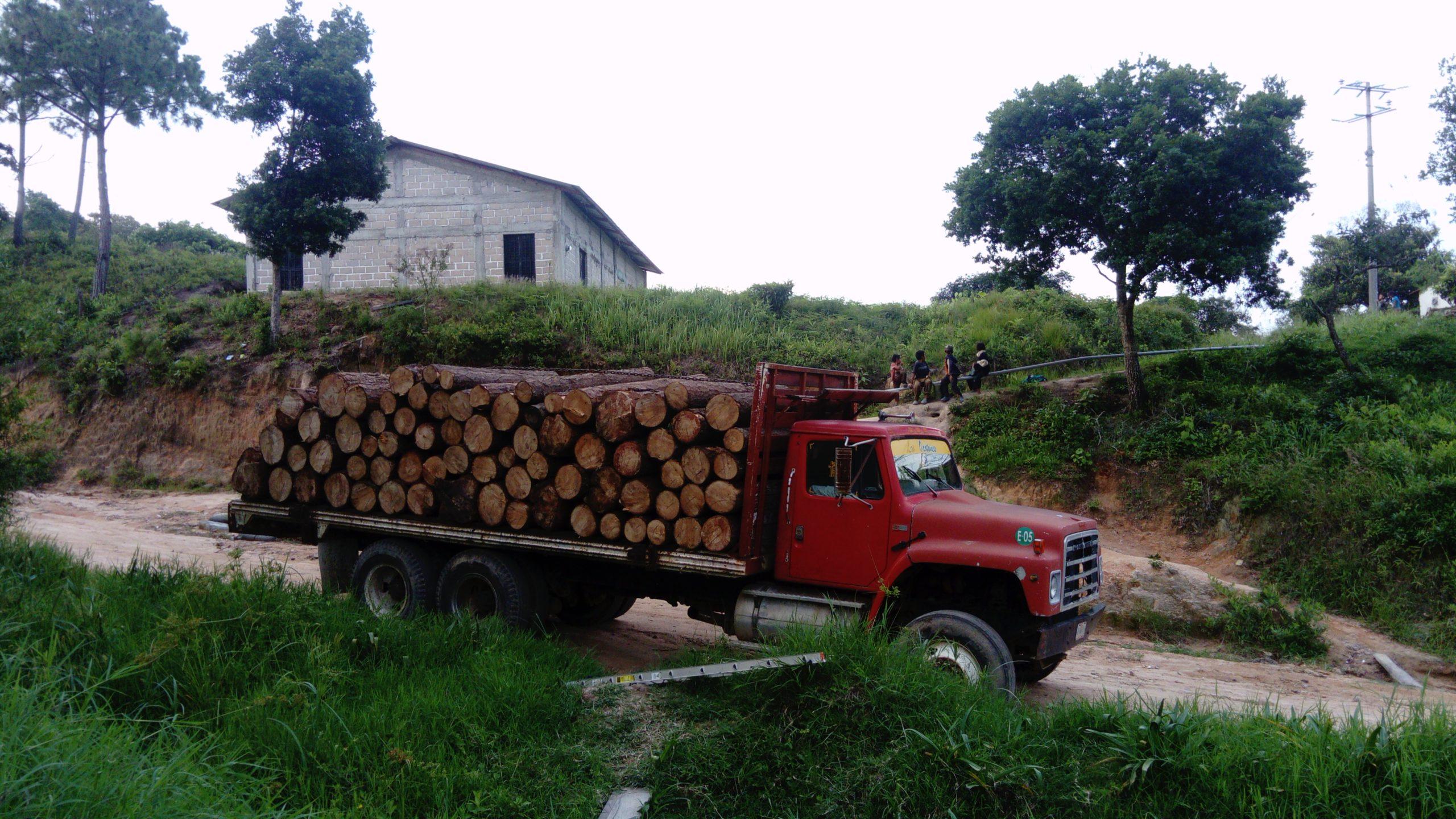 Manejo forestal en Chiapas