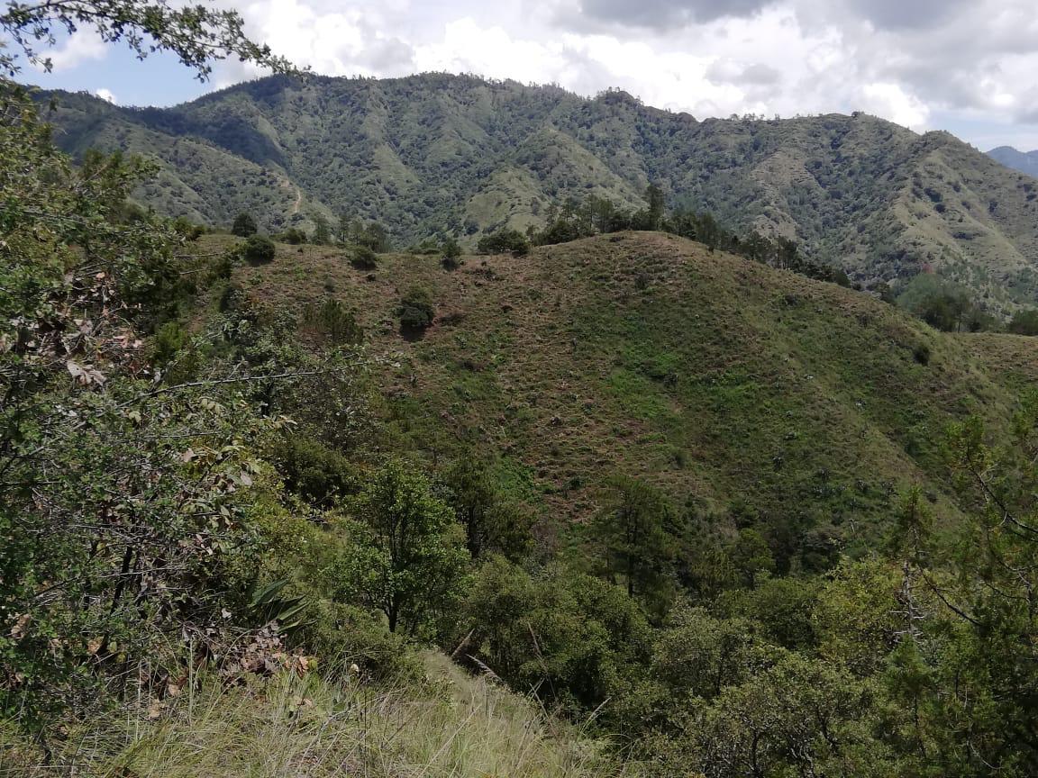 Unión de los ejidos de la Sierra Norte de Puebla