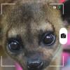 ¿Qué son los Kinkajú Candid Animal Cam