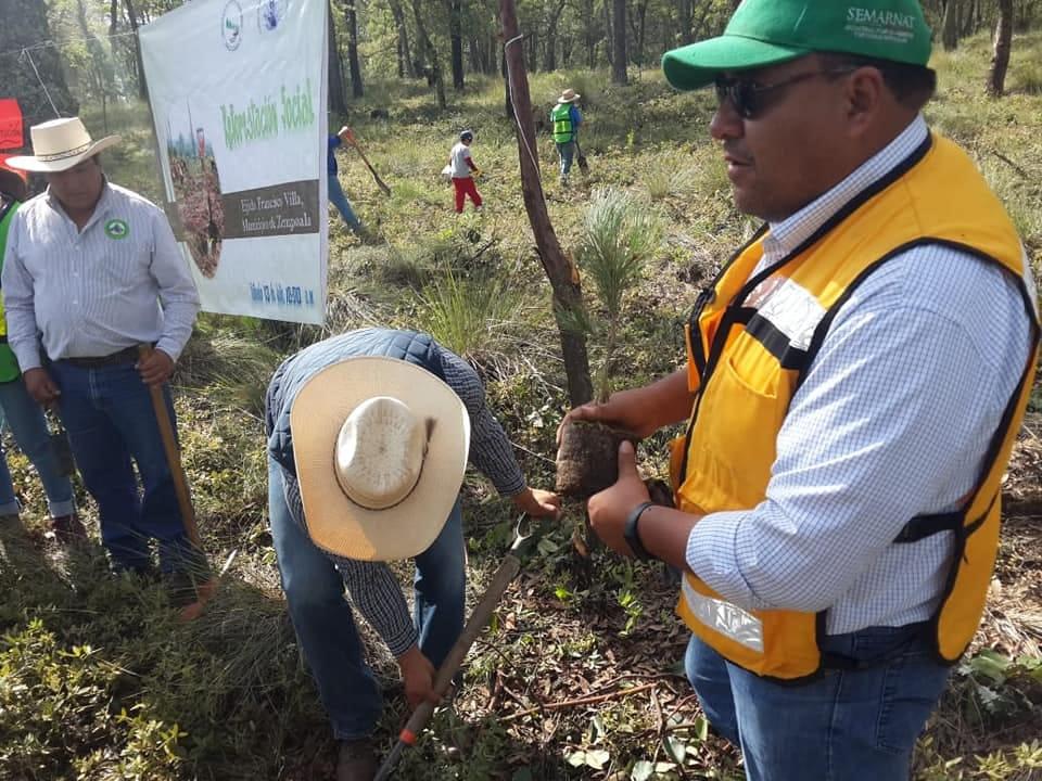 Manejo forestal en Hidalgo