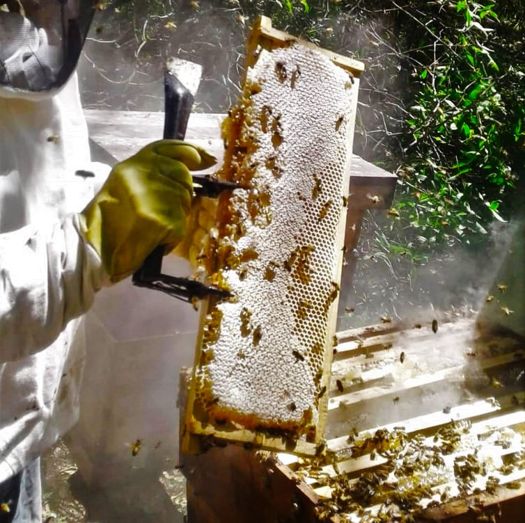 abejas gran chaco