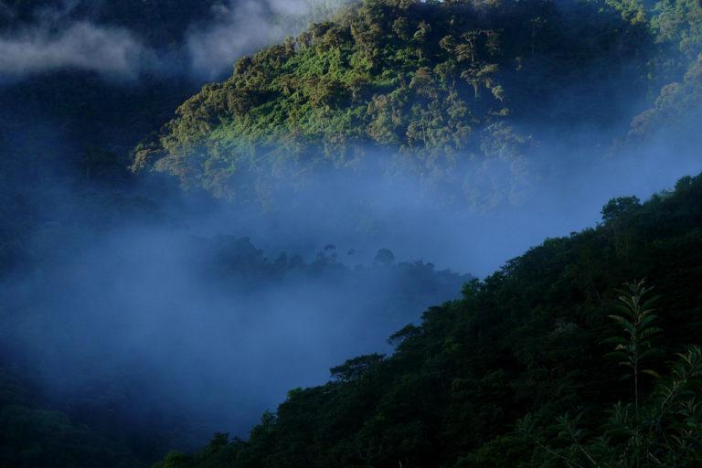 Ranas ganan a la minería. El valle de Íntag es uno de los lugares con mayor riqueza biológica de Ecuador. Fotografía de Carlos Zorrilla.