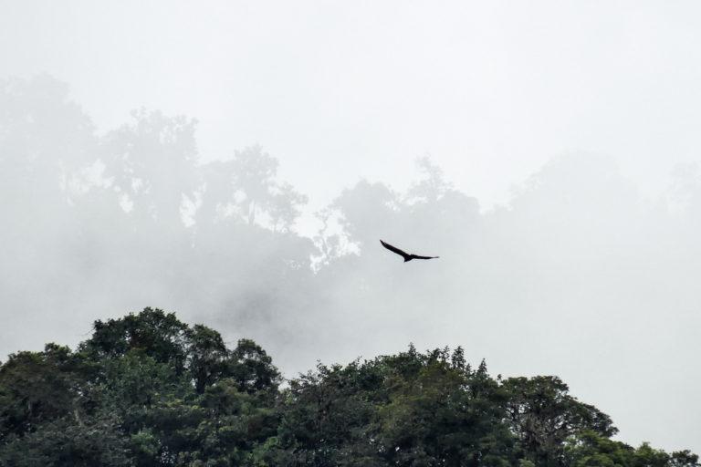 Ranas ganan a la minería. El valle de Íntag protege a varias especies En Peligro y Peligro Crítico. Fotografía de Íntag Santuario de Vida.