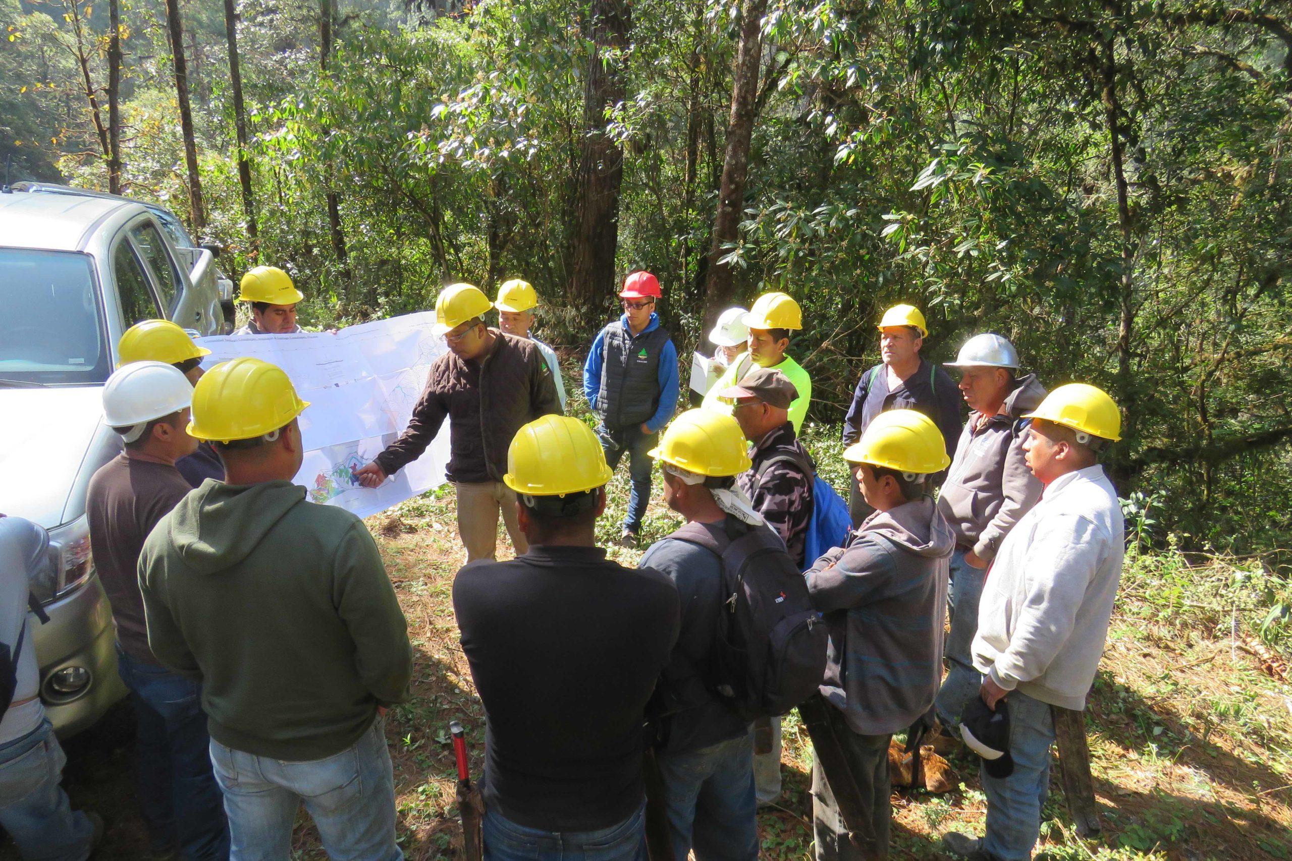 Trabajo forestal en Oaxaca
