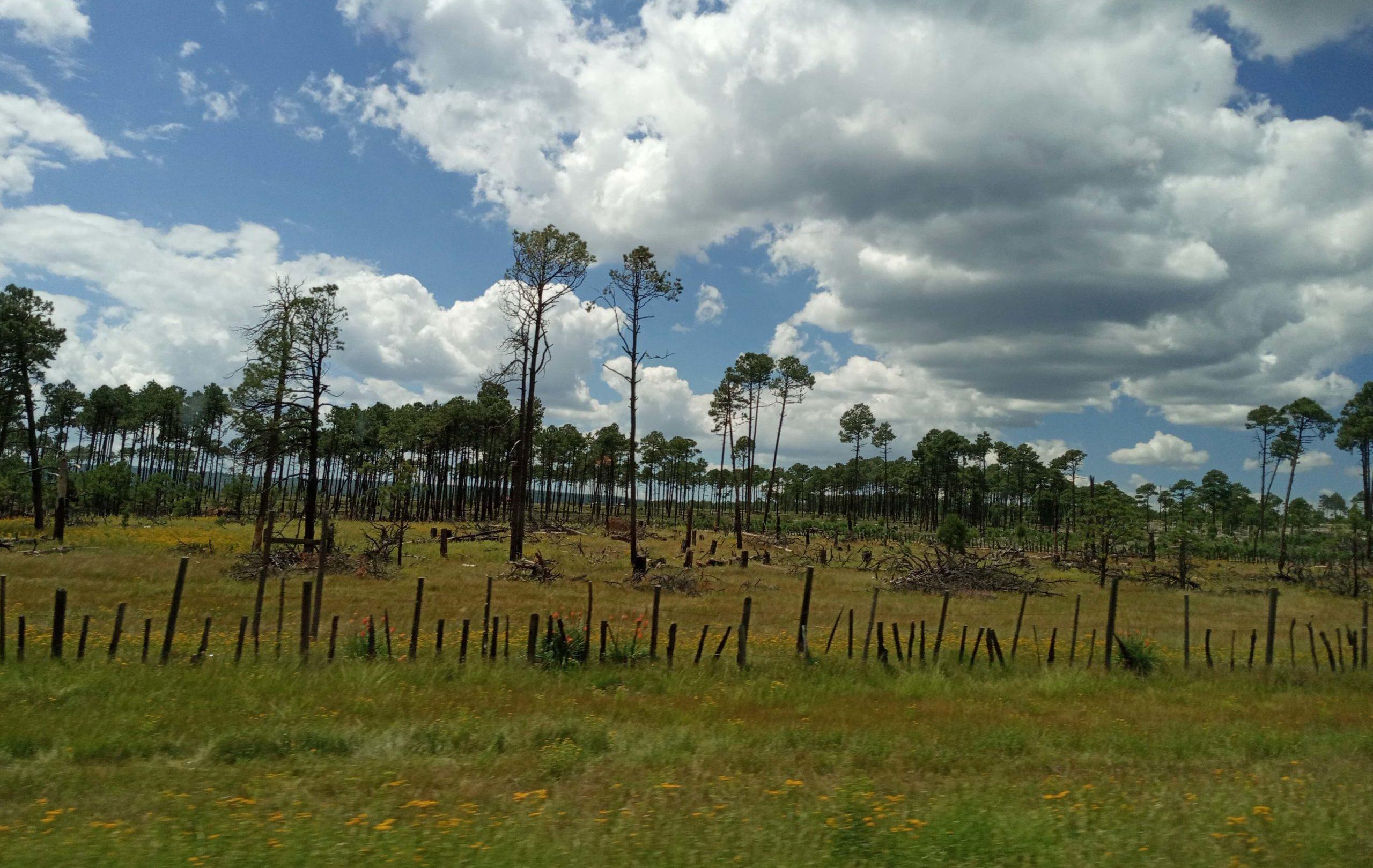 Bosques talados en Chihuahua