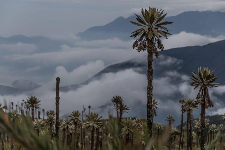 Chingaza protege ecosistemas entre los 800 y los 4020 metros sobre el nivel del mar. Foto: Parques Nacionales Naturales de Colombia.