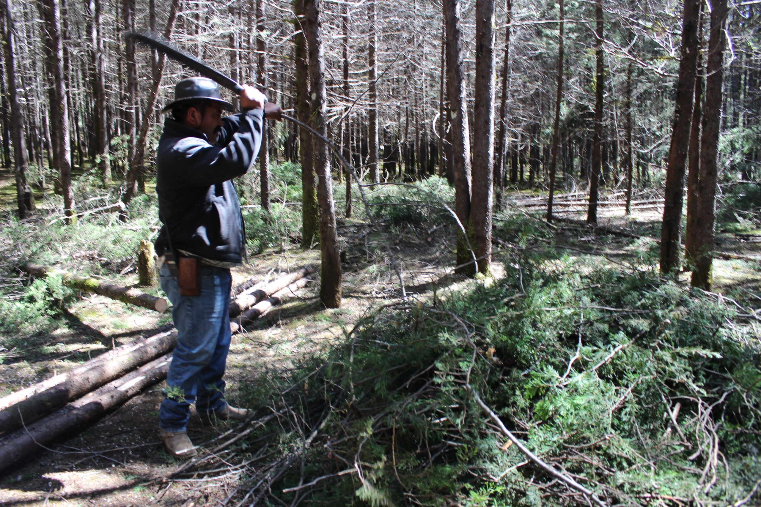 Manejo forestal Amanalco, Estado de México