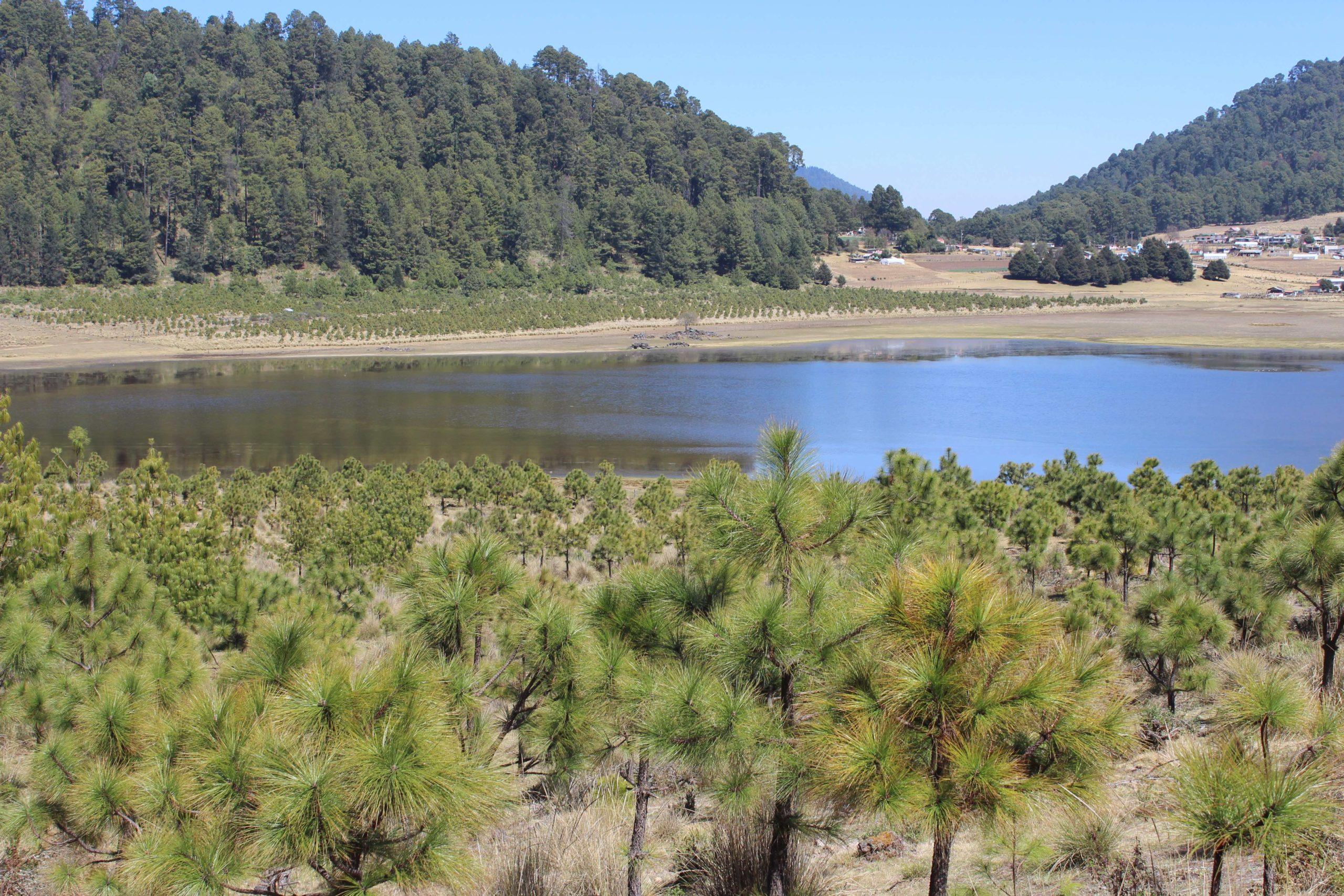 Amanalco-Edomex-manejo forestal