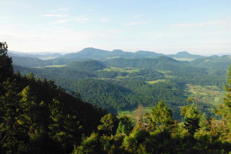 amanalco-Manejo forestal