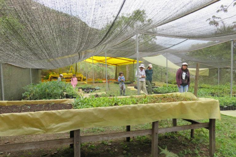 Bolivia Silvia Gallegos bosques