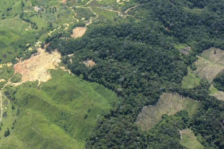 Zona con explotación de oro de aluvión en tierra y cultivos de coca. Foto: Informe EVOA 2019.
