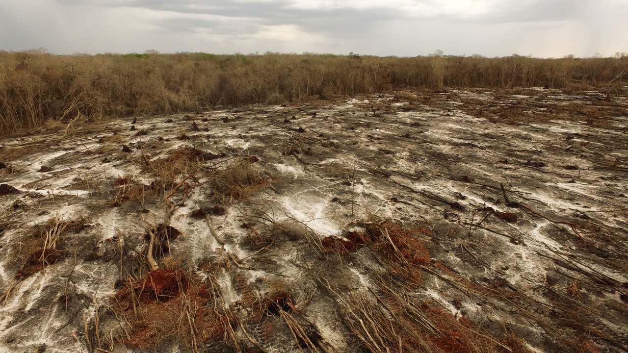 Deforestación-Hopelchén