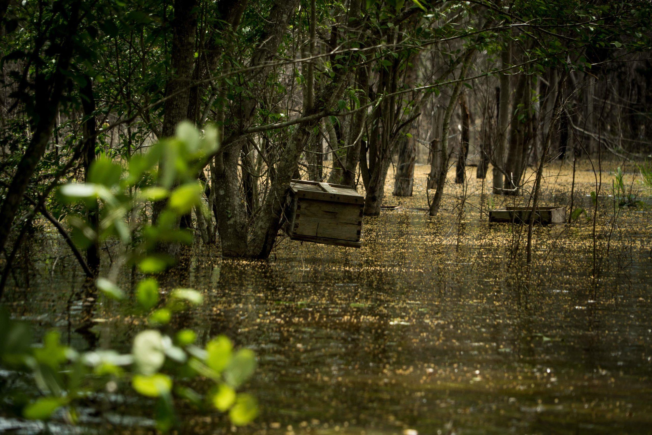 Hopelchén-deforestación-inundaciones