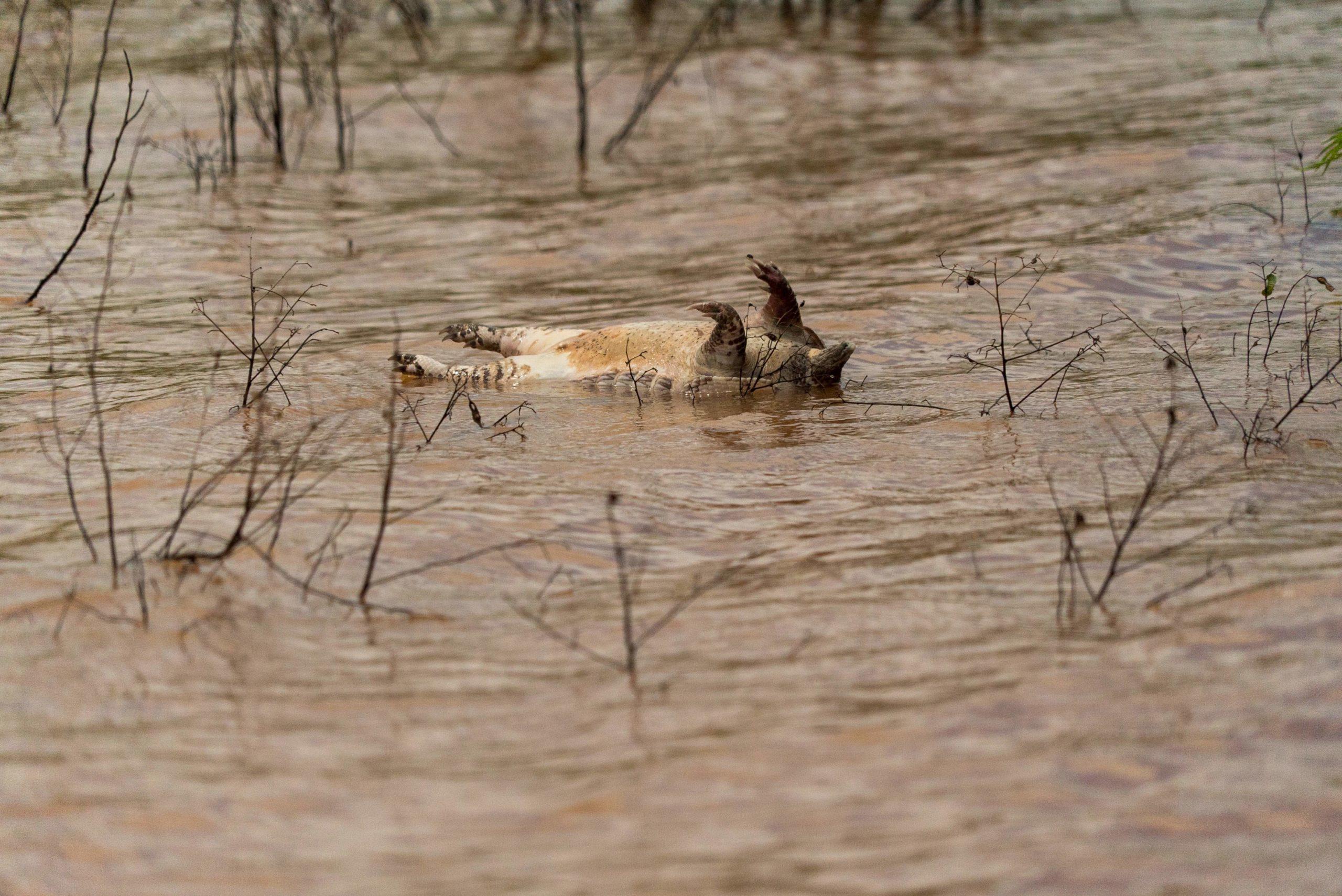 Hopelchén-Inundaciones