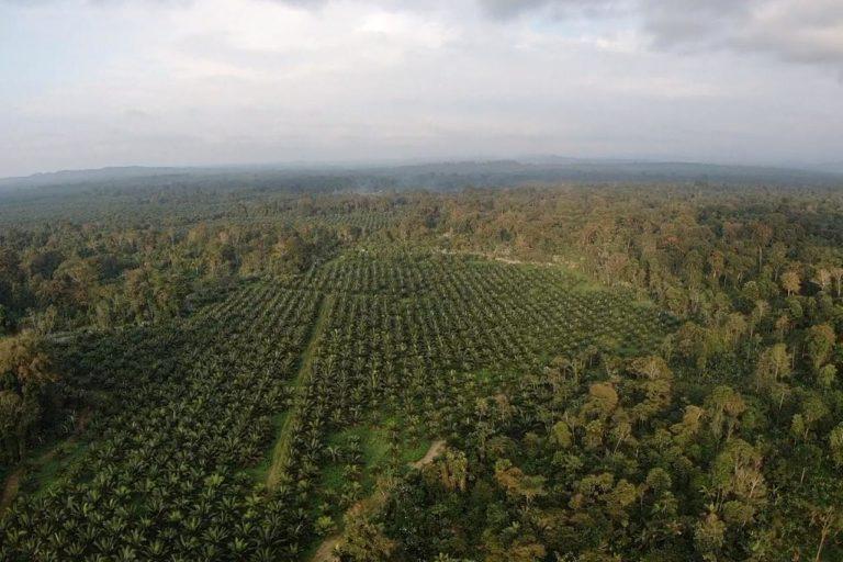 Un informe del Ministerio de Agricultura y Ganadería dice que existe una sobreposición de 251 hectáreas en la comunidad afro-ecuatoriana Barranquilla de San Javier. Fotografía de Gustavo Redín.