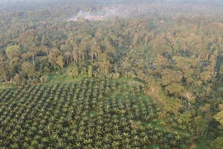 Los cultivos de Energy & Palma se encuentran en una de las zonas más biodiversas: el Chocó. Sus bosques húmedos tropicales se extienden desde Panamá hasta el noroccidente de Ecuador. Fotografía de Gustavo Redín.