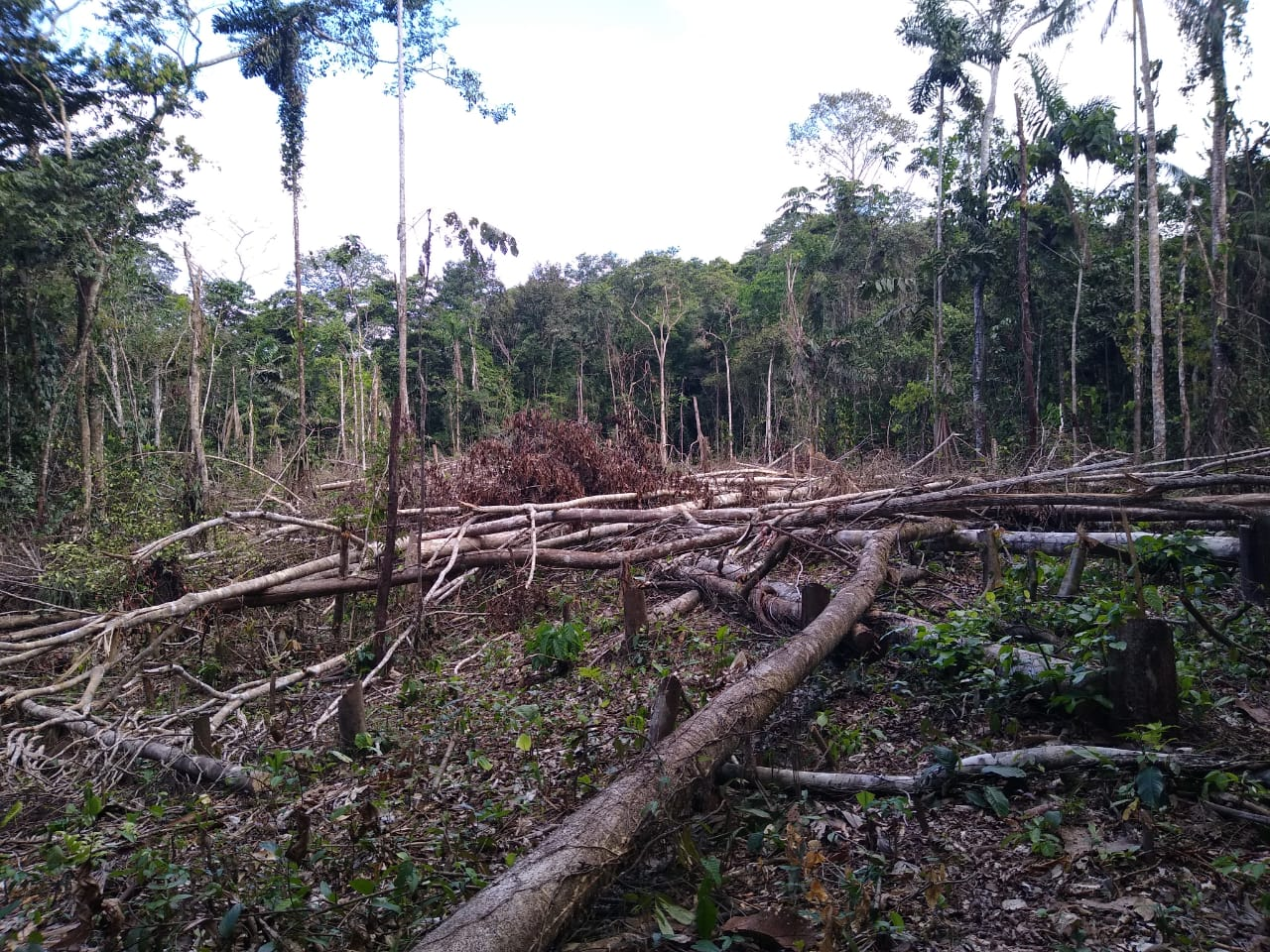 Indigenous leaders of Santa Martha estimate that some 600 hectares of primary forest had been destroyed as of late 2020. Photo by members of the community of Santa Martha.