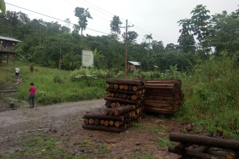 Entre 2001 y 2019, Ecuador perdió 822 mil hectáreas de bosques. Foto: tomada de la cuenta de Twitter de las Fuerzas Armadas del Ecuador.