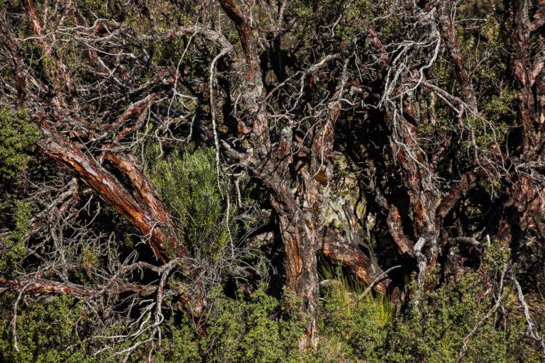 vicuñas en Pampa Galeras