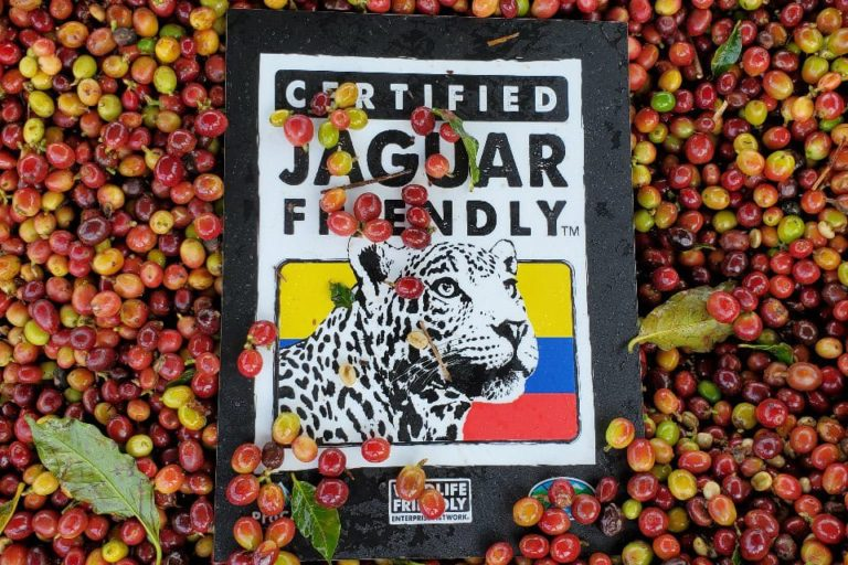 El café amigo del Jaguar es un producto certificado bajo la ecoetiqueta JAGUAR FRIENDLY. Foto: ProCAT.