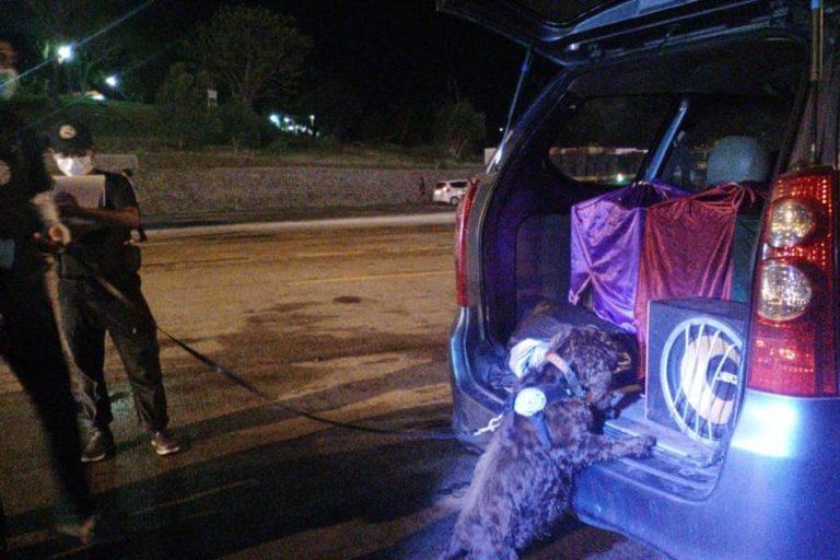 En Scent Imprint for Dogs cuentan con un equipo de alrededor de diez perros que son parte de proyectos de detección de olores alrededor del mundo. Foto: Scent Imprint for Dogs.