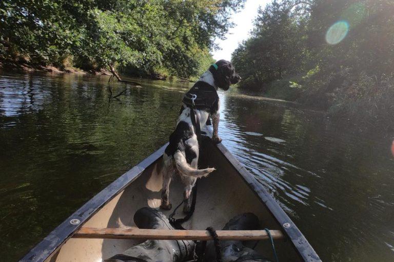 El entrenamiento de perros como Cash los preparan para lugares con climas tropicales como la Amazonía. Foto: Scent Imprint for Dogs.