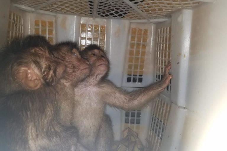 Un grupo de primates son rescatados gracias al trabajo de los perros detectores. Foto: Scent Imprint for Dogs