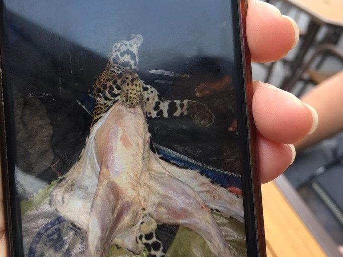 Cuando se oferta un jaguar, estos no son mostrados directamente. Primero se envían fotografías al posible comprador para asegurar que los traficantes cuentan con el animal. Foto: Earth League International (ELI)