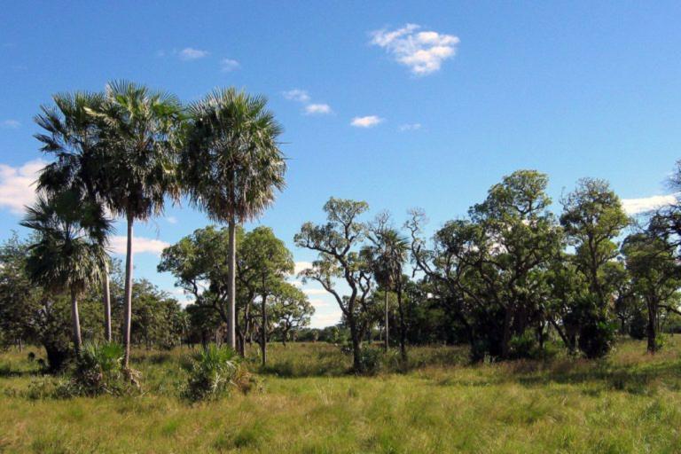 Paisaje del Gran Chaco, hábitat del esquivo pichiciego chaqueño. Foto de Ilosuna, con licencia Creative Commons Atribución 1.0 licencia genérica.