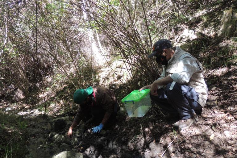 Enrique La Marca monitoreó, junto con miembros de su equipo, a las ranas liberadas a comienzos de noviembre de 2020, antes de liberar tres ejemplares más el pasado 17 de diciembre. Foto: María Fernanda Rodríguez.