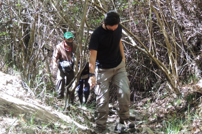 Las ranitas de Mucuchíes habitan en bosques secos montanos que están desapareciendo en Mérida, Venezuela. La tala indiscriminada es una de las principales causas. Foto: María Fernanda Rodríguez.