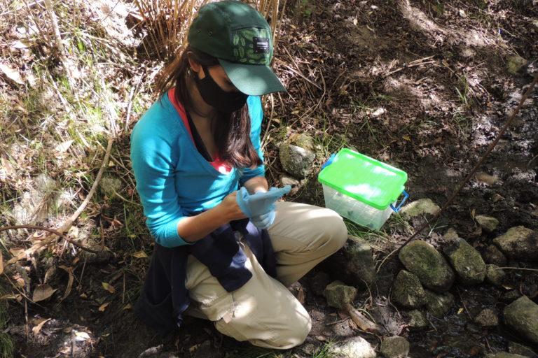 El equipo de REVA trabaja desde 2018 en la recuperación de la rana de Mucuchíes. Foto: María Fernanda Rodríguez.