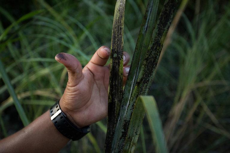 El petróleo sigue siendo una de las propuestas para reactivar la economía en el país. Fotografía de Iván Castaneira/Agencia Tegantai.