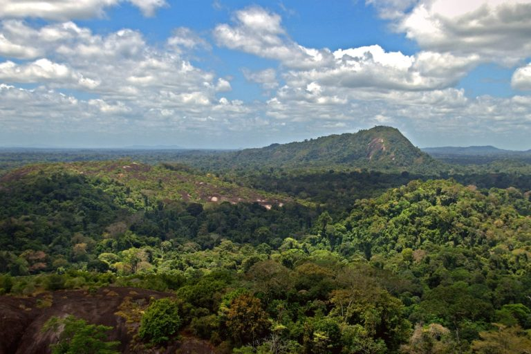 La Reserva Natural de Surinam Central fue nombrada por la Unesco como Patrimonio de la Humanidad. En el norte de esta reserva se han registrado alertas de caza furtiva de jaguares para el tráfico. Foto: David Evers / Wikimedia Commons.