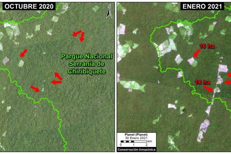 Deforestación en el Parque Nacional Chiribiquete, sector norte 1. Coordenada de referencia: 2.00975, -73.45541. Datos: Planet, MAAP.