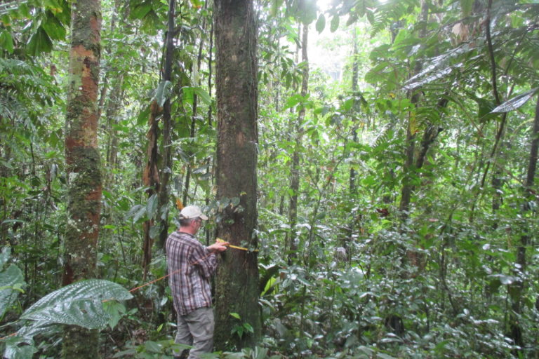 El proyecto LaForeT fue liderado por científicos ecuatorianos y alemanes de la Universidad Estatal Amazónica, el Instituto Johann von Thünen, y la Universidad Técnica Luis Vargas Torres. Fotografía de Richard Fischer.