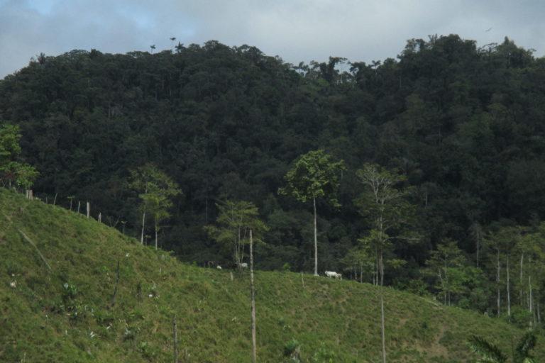 Cuando se pierden los bosques, se deja sin recursos a las comunidades, en su mayoría indígenas, que dependen de ellos para subsistir. Fotografía de Richard Fischer.