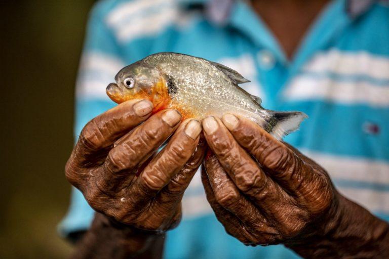 Los monitores de pesca ahora son investigadores locales, como este en la comunidad San Luis-La Rompida. Él sostiene en sus manos una piraña (Pygocentrus caribba). Cortesía: Camilo Díaz / WWF-Colombia.