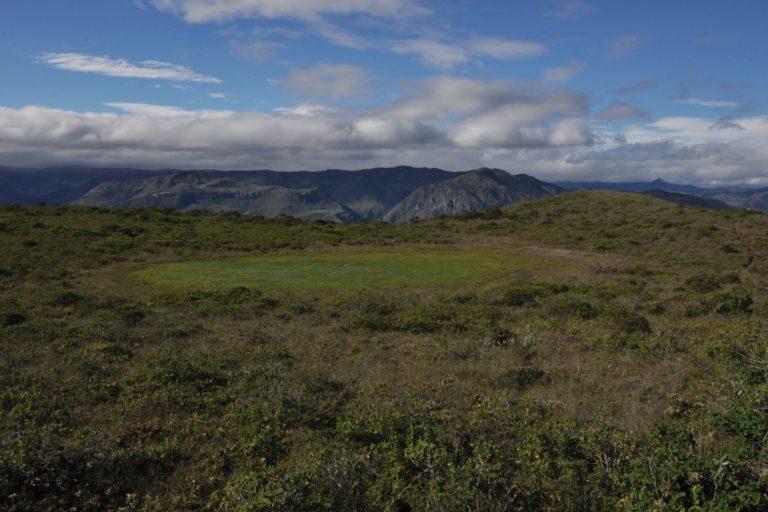 Primer plano del hábitat de Leptodeira misinawui. Foto: E. Celi.