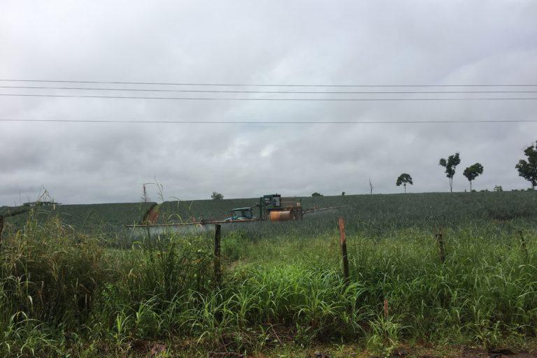 Una plantación de piña cerca del humedal Refugio Nacional de Vida Silvestre Caño Negro en 2017. Fotografía: Lenin Corrales.