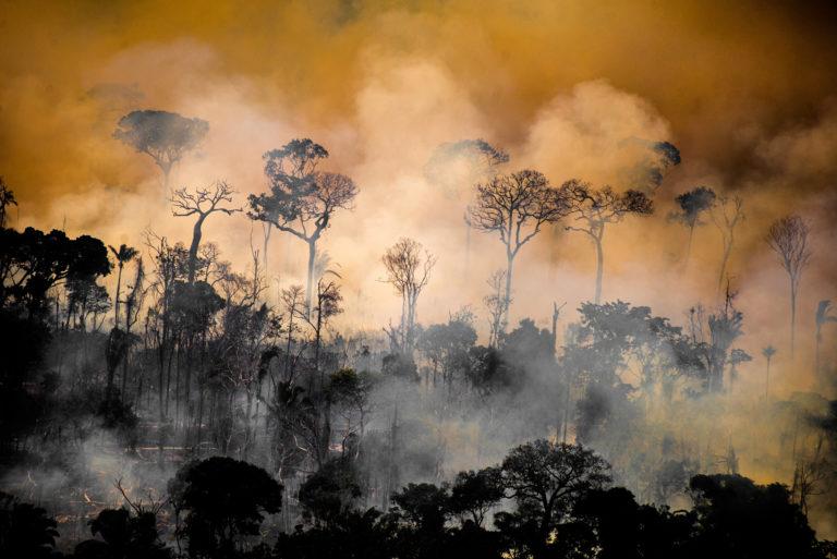 Bosque junto a los límites del territorio indígena Kaxarari, en Lábrea, estado de Amazonas durante la temporada de quema 2020 en la Amazonía brasileña. Tomada el 17 de agosto de 2020. CRÉDITO: © Christian Braga / Greenpeace