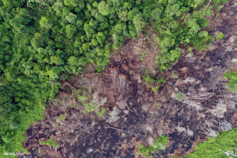 Bosque de turba drenado, despejado y quemado en el Borneo indonesio. Foto de Rhett A. Butler