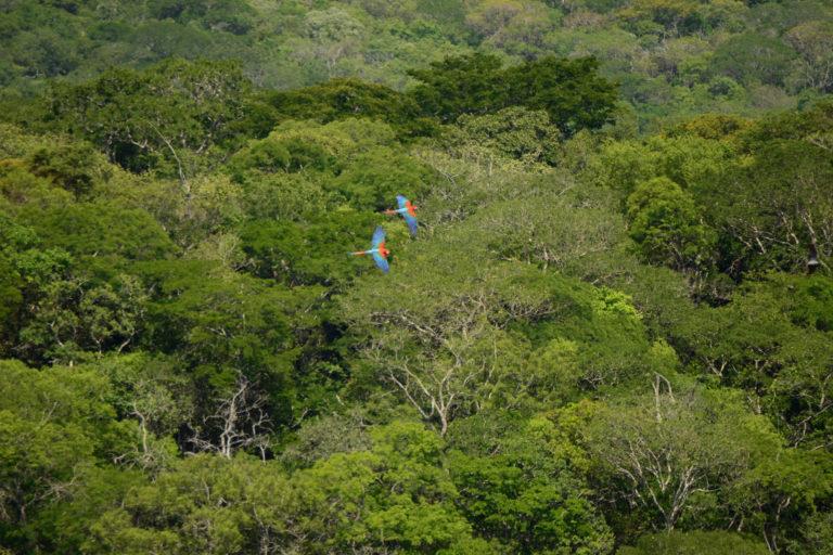 Las nacientes del río San Lorenzo, junto a las del río Ipiás y río Ramada, hacen parte de las cabeceras del río Tucabaca, que recorre largos kilómetros en medio del Bosque Seco Chiquitano. Foto: Eduardo Franco Berton.