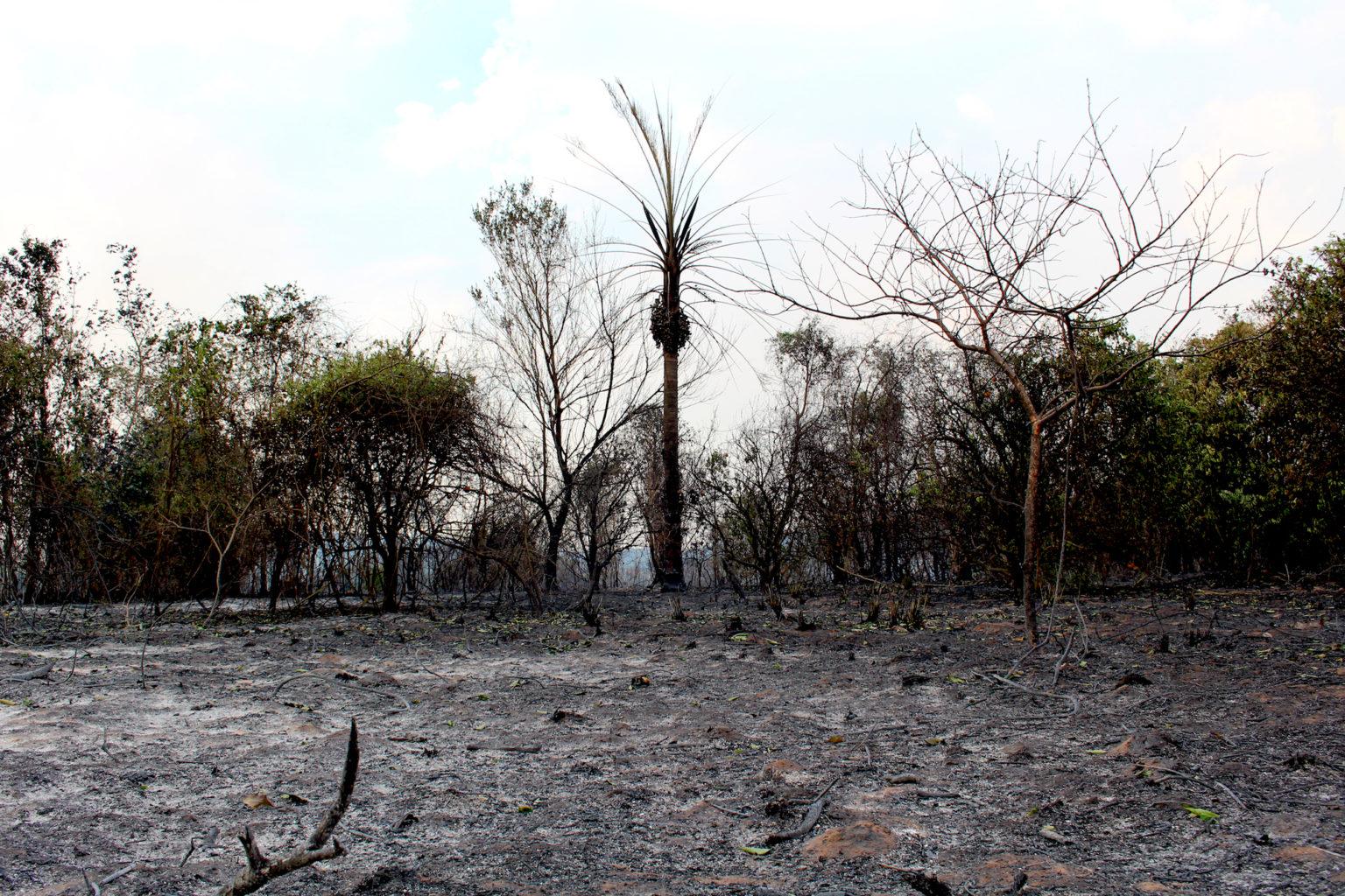Fire-devastated landscape in San Rafael. Image by Hugo Garay/WWF.