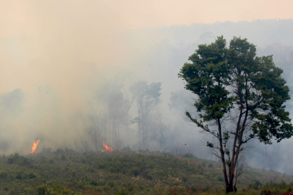 Smoke settled over San Rafael as fires burned in November and December 2020. Image by Hugo Garay/WWF.