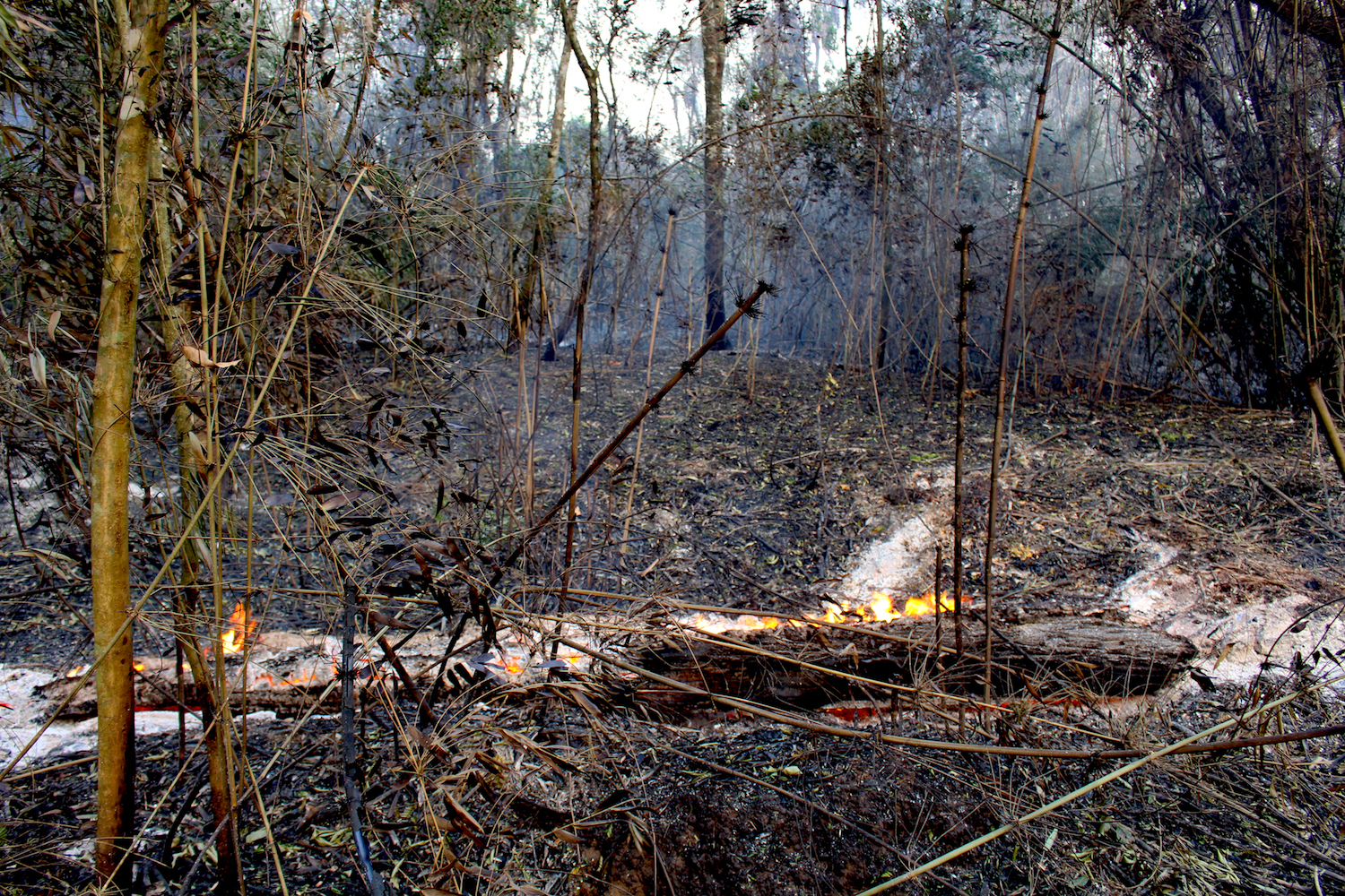 San Rafael Reserve was affected by fires in late 2020 at a scale that had previously not been recorded. Photo by Hugo Garay/WWF.